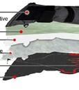 Beheizbare-Handschuhe-mit-4-Stufen-Temperaturregler-wasserabweichend-atmungsaktive-mit-3M-Thinsulate-und-TPU-Membran-Akkubetrieb-0-4